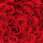 a guide to red roses Landscaper Dallas